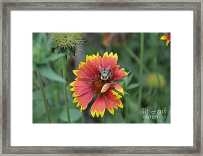 Summer Framed Print by Jo Thompson Pennypacker