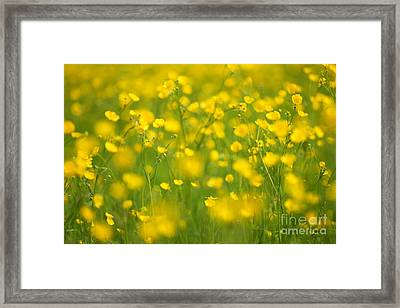 Summer Framed Print by Josh Baldo