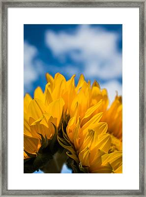 Summer Joys Framed Print by Shelby Young
