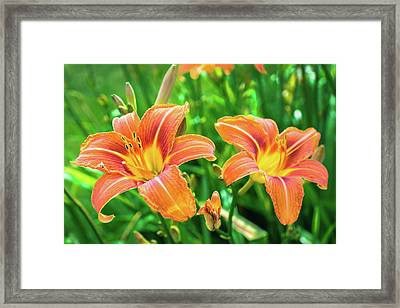 Framed Print featuring the photograph Summer Jubilation by Bill Pevlor