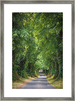 Summer Lane Framed Print