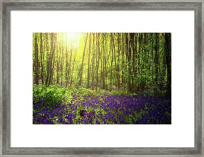 Summer Light Framed Print by Martin Newman