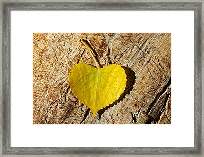 Summer Love Heart Shaped Leaf Framed Print by Tracie Kaska