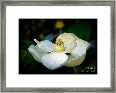 Summer Magnolia Framed Print