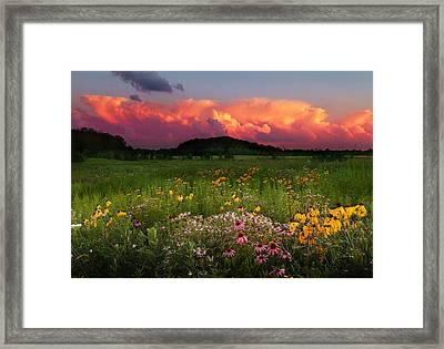 Summer Majesty Framed Print