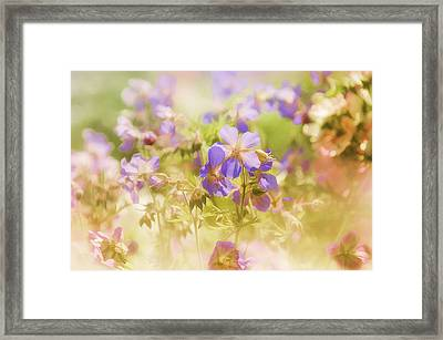 Framed Print featuring the photograph Summer Meadow by Elaine Manley