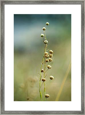 Summer Meadow Framed Print by Nailia Schwarz