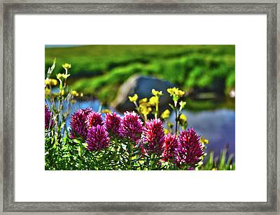 Framed Print featuring the photograph Summer Morning Blossoms by Marie Leslie
