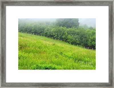 Summer Morning Rising Mist Framed Print by Thomas R Fletcher