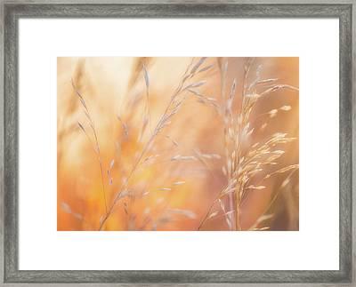 Summer Mornings Framed Print by Darren White