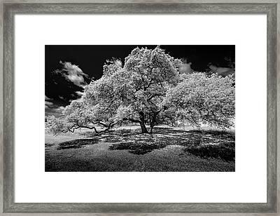 A Summer's Night Framed Print