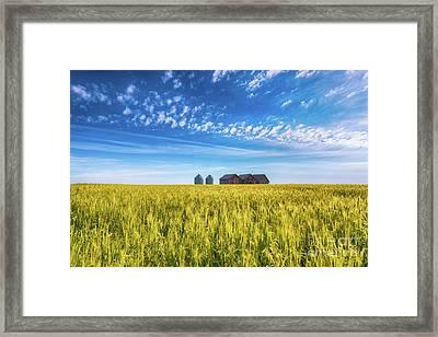 Summer On The Prairies Framed Print by Ian McGregor