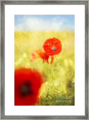 Summer Painting Framed Print