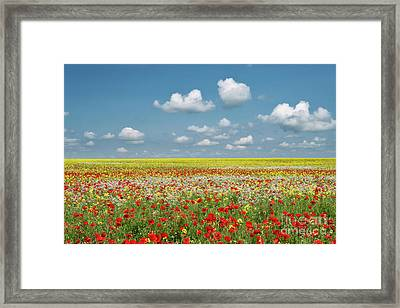 Summer Palette Framed Print by Tim Gainey