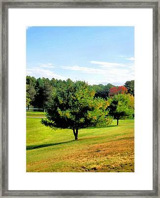 Summer Park 2 Framed Print