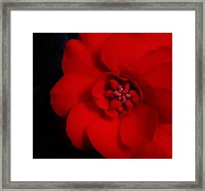 Summer Passion Framed Print