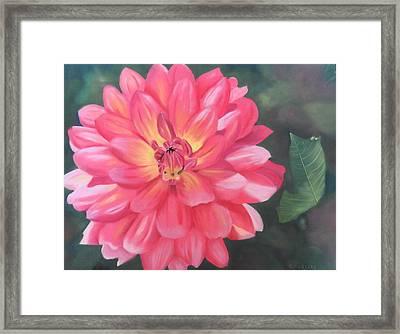 Summer Pinks Framed Print