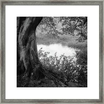Summer Pond Framed Print