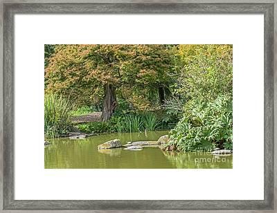 Summer Pond Framed Print by Kate Brown
