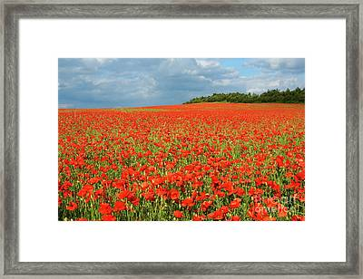 Summer Poppies In England Framed Print by David Birchall