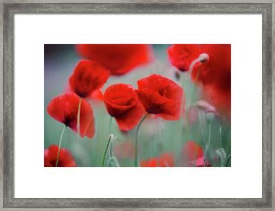 Summer Poppy Meadow 2 Framed Print