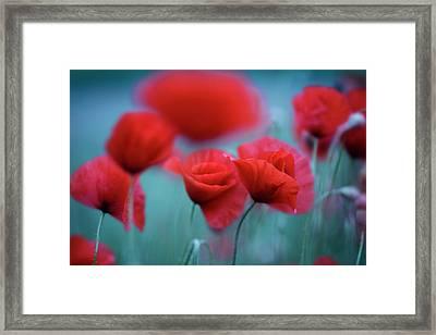 Summer Poppy Meadow 3 Framed Print