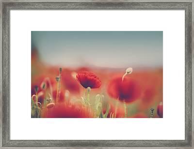 Summer Poppy Meadow Framed Print by Nailia Schwarz