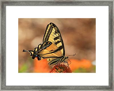Summer Portrait Framed Print by Donna Kennedy