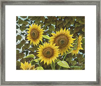 Summer Quintet Framed Print