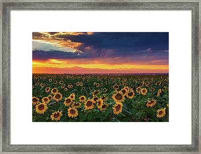 Summer Radiance Framed Print