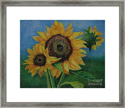 Summer Radiance Framed Print by Louise Williams