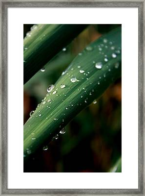 Summer Rain Framed Print by Alexandra Harrell