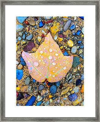 Summer Rain Leaf Framed Print