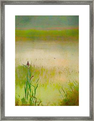 Summer Reeds Framed Print by Catherine Alfidi