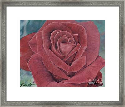 Summer Rose Framed Print