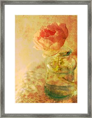 Summer Rose Framed Print by Catherine Alfidi