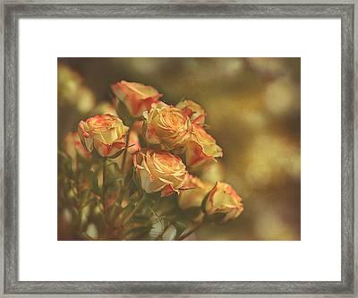 Summer Roses #2 Framed Print