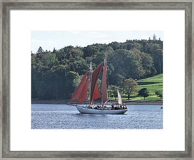 Summer Sailing In Lunenburg Framed Print