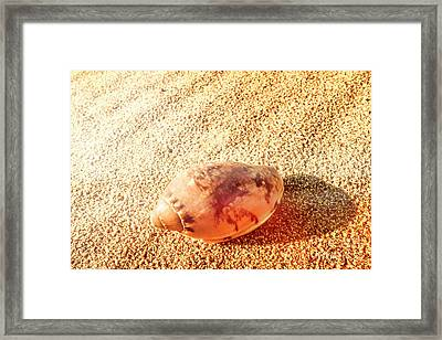 Summer Sea Shells Framed Print