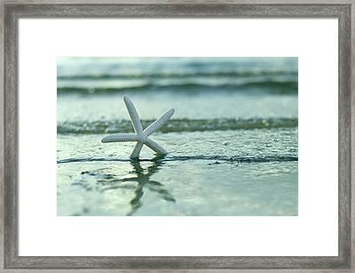Summer Sea Star Framed Print