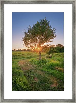 Summer Set Framed Print
