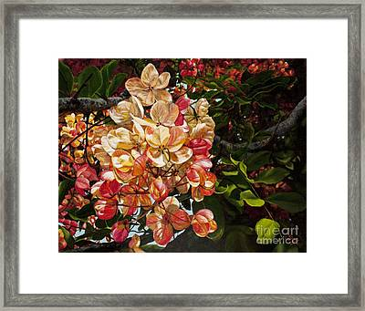 Summer Shower Tree Framed Print by Pati O'Neal