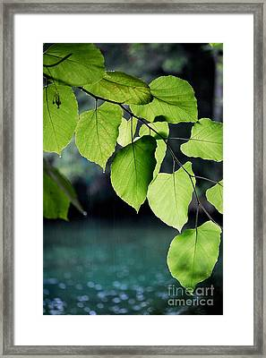 Summer Showers Framed Print