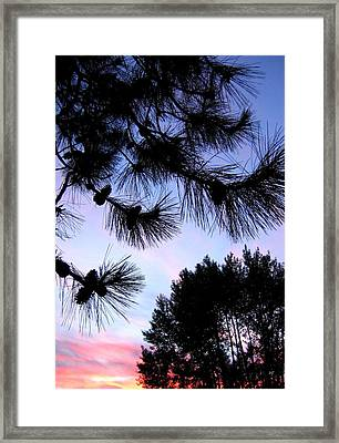 Summer Silhouettes Framed Print by Will Borden
