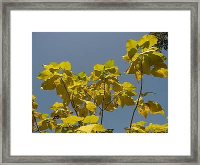 Summer Sky Framed Print by Stephen Davis