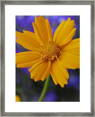 Summer Smile Framed Print by Juergen Roth