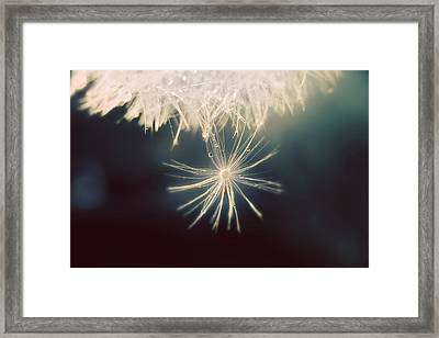 Framed Print featuring the photograph Summer Snow by Amy Tyler