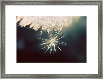 Summer Snow Framed Print by Amy Tyler