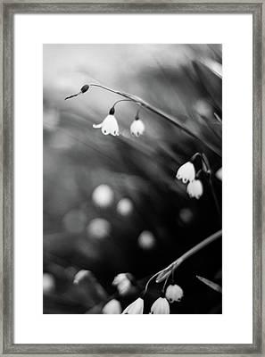 Summer Snowflakes Framed Print by Daniel Lih