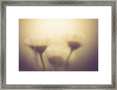 Summer Sombrous Framed Print by Shane Holsclaw